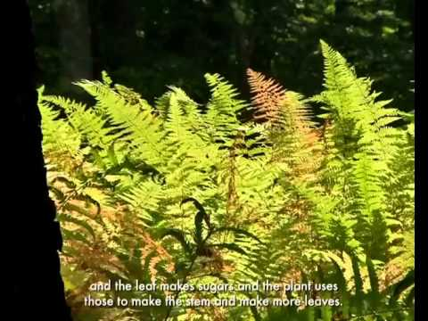 Carbon Dioxide in New England Forests on YouTube