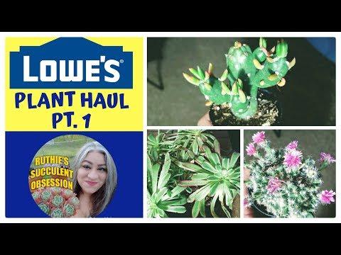 Plant haul   Lowe's plants   PT.1