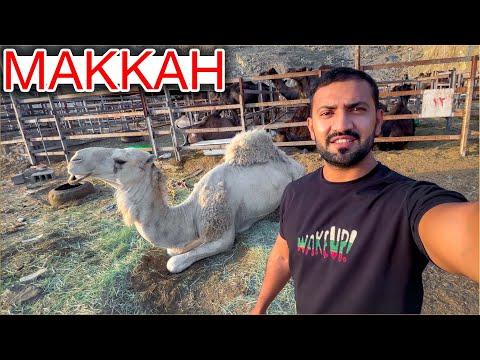 Bakra Mandi in MAKKAH 🐪 🐏 🐄 Price of Goat, Camel & Cow Mandi   Eid al Adha in Makkah Saudi Arabia