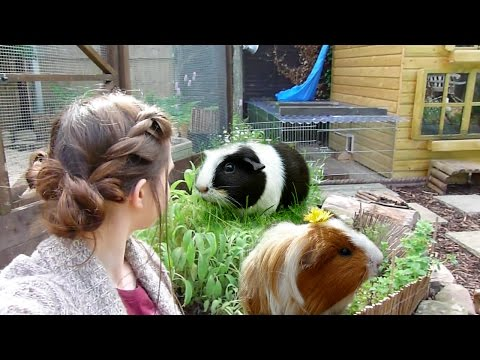 Garden For Guinea Pigs!