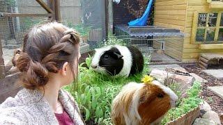 Garden For Guinea Pigs!