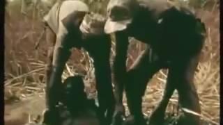 Ловля питона на ногу (Африка)