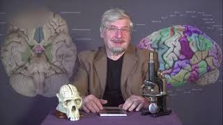 Наука и Мозг В. П. Зворыкин 001