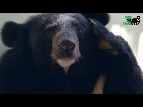 Free the bears Laos