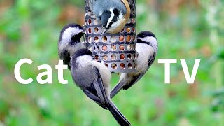 New Cat TV 8 Hours: Beautiful Birds, Squirrels for Cats to Watch, Relax Your Pets, Nature Sounds.