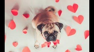 онлайн-гадание 'Поздравит ли он меня с Днем Святого Валентина?'