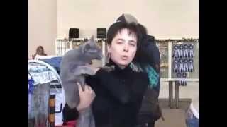 Русская голубая - Все О Породе