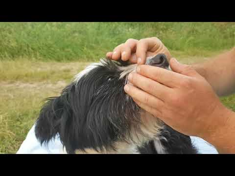 how to remove a tick from the dog