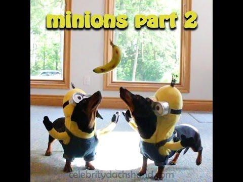 "Wiener Dog Minions PART 2 – ""BA-NA-NA!"""