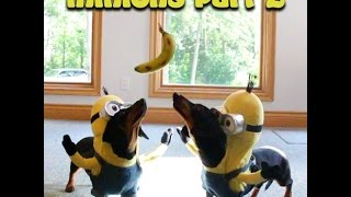 "Wiener Dog Minions Part 2 - ""ba-na-na!"""