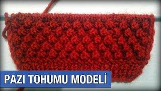 Pazı Tohumu Modeli