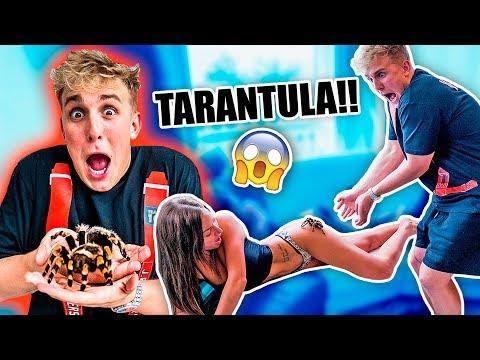 GIANT TARANTULA PRANK ON MY GIRLFRIEND!!