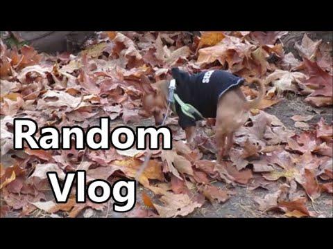 Random Vlog 11.13.19 Day 2331