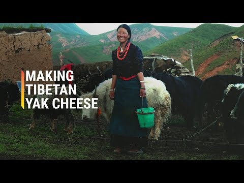 The Dying Art of Making Tibetan Cheese
