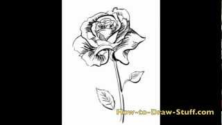 How to Draw Draw a Rose Step by Step