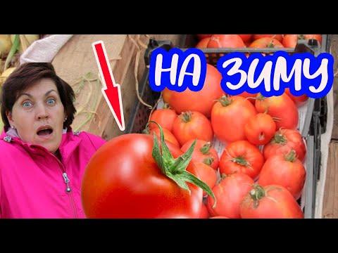 Помидоры зимой больше не покупаю! Лучший способ заготовки помидоров на зиму  от Фермачей в деревне