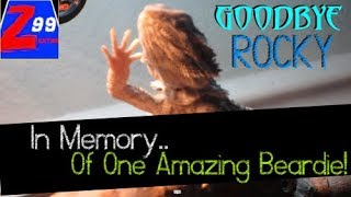 Rocky passes away unexpectedly!  ..in memory of a truly amazing bearded dragon