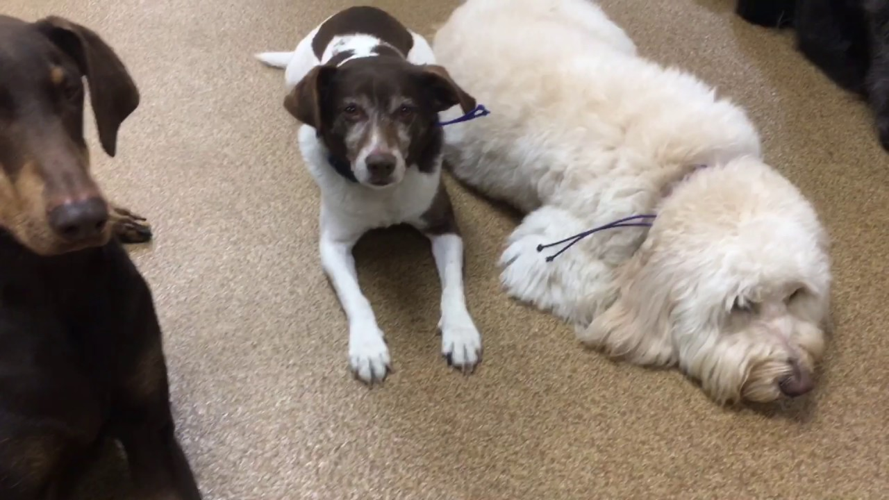 Affordable Dog Training & Puppy Development Boston, MA