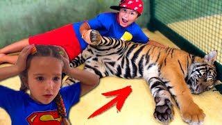 Аминка ГЛАДИТ Тигров и КОРМИТ КРОКОДИЛОВ