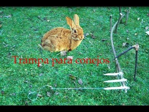 Abssupervivencia trampa mortal para conejos youtube - Trampas para ratones de campo ...
