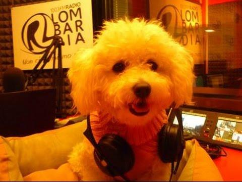 Intervento a Radio Lombardia: Una cuccia per due | Qua la Zampa