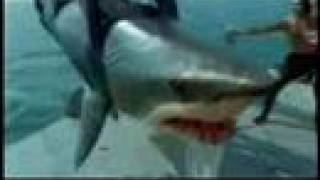 Raw Video: GREAT MAKO SHARK ATTACK, EAT AND SWALLOW MAN