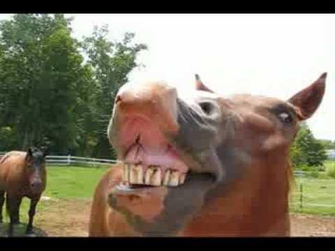 Horses Singing Happy Birthday YouTube