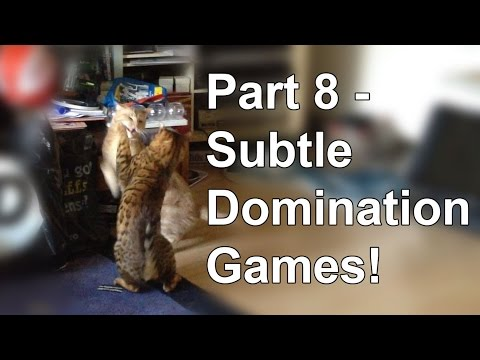 Bengal cat behaviour - Subtle changes Part 8