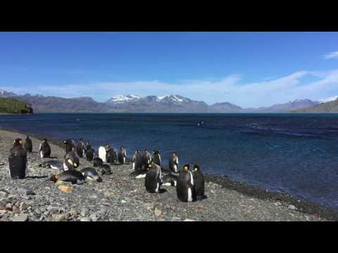 Yaghans voyage to South Georgia. Part 3: South Georgia to Cape Town