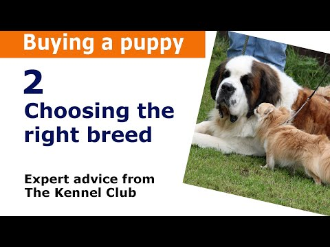 Choosing the Right Dog Breed for You - Kennel Club Advice