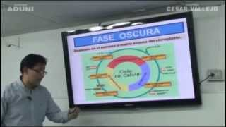 Biología  Fotosíntesis - Academia Aduni