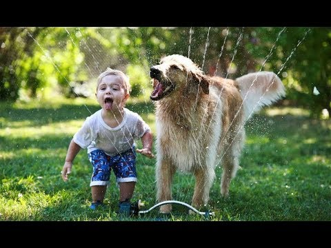 Golden Retriever Protecting And Playing Babies Kids Dog And Baby
