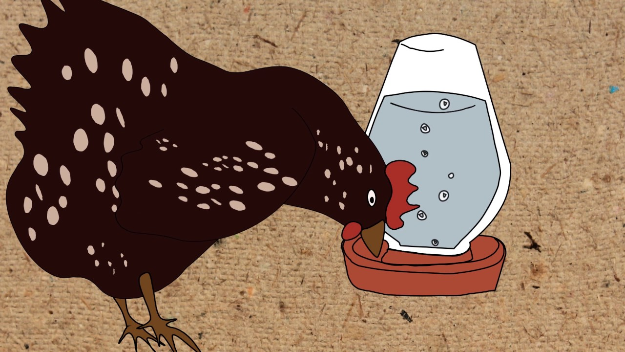 Keeping Chickens - The Ultimate Beginners Guide For The