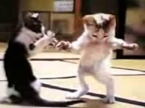 кошачий танец живота
