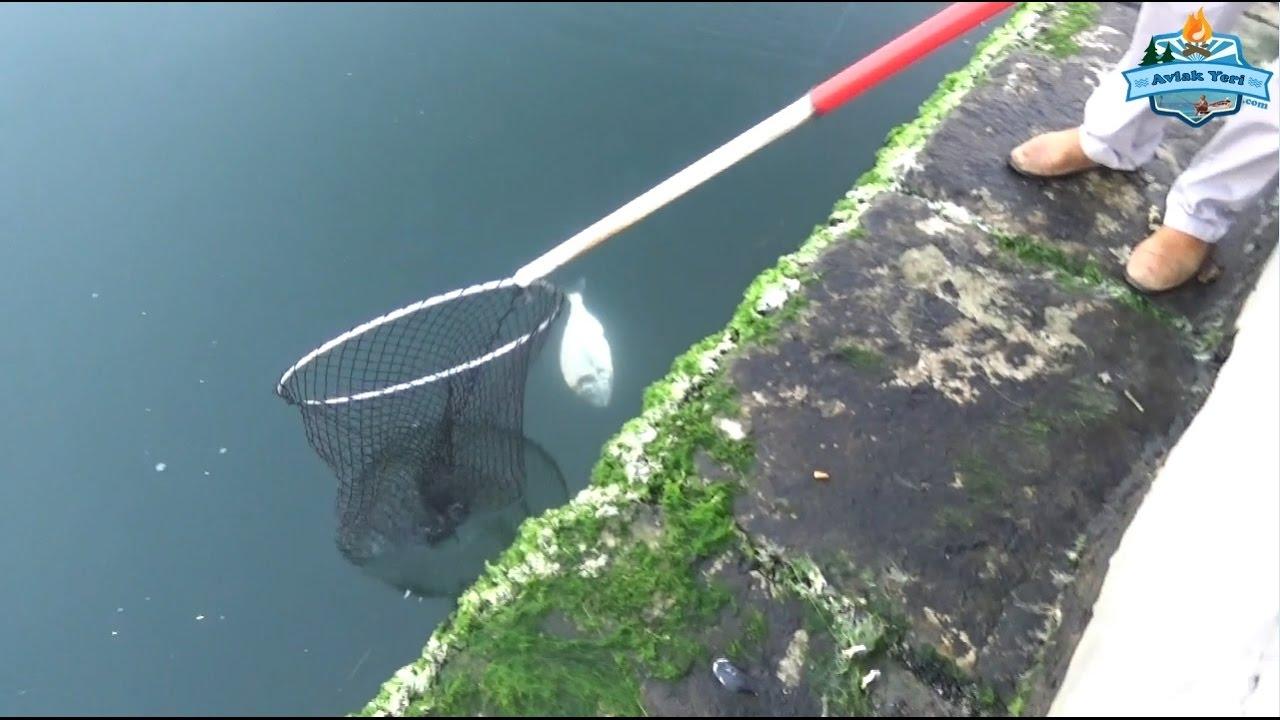 İzmirde Kıyıdan Kiloluk Çupralar!!! Shore Fishing İn İzmir!!!