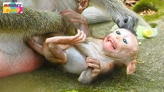 OMG! Why silly Dolly monkey doing seriously to newborn Brutus Jr like that pity baby|Monkey Daily781