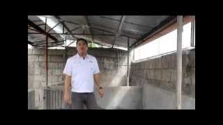 Proper Housing for Pigs -Tamang Sukat ng Kulungan- B-MEG Premium Hog Raising