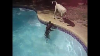 Cooper and Dakota go for a swim
