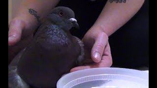 VICTORY! Alabama Forestry Association Pigeon Shoots Shut Down!