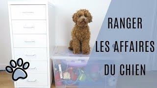 Gambar cover Ranger les affaires de son chien | Poodle Toy (16 months)