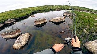 ШОК! Откуда в этом ручейке СТОЛЬКО РЫБЫ?! Дикая рыбалка на севере