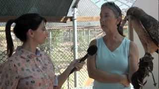 Ojai Raptor Center  -  nonprofit activism charity animals adorable owls
