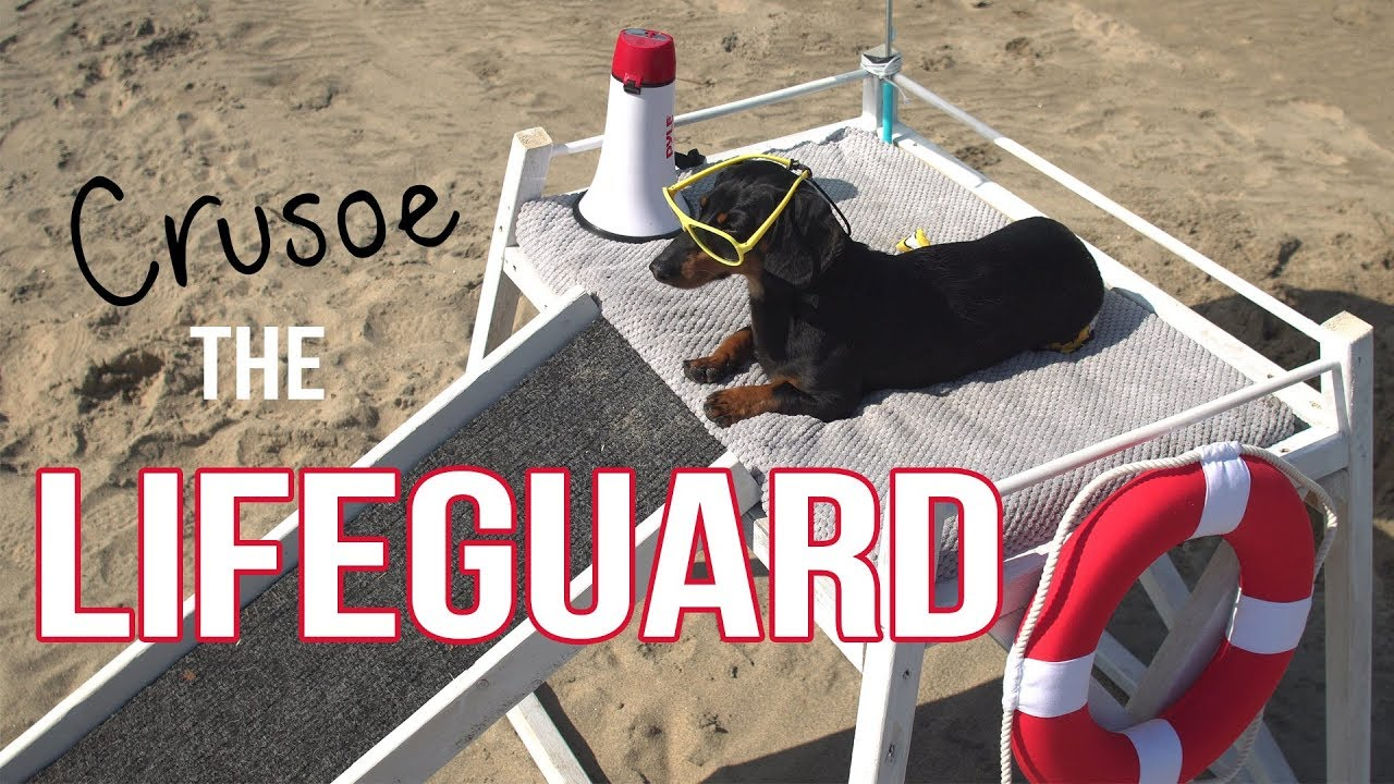 Download Ep 2: Crusoe the Dachshund Lifeguard - Funny Dog at the Beach!