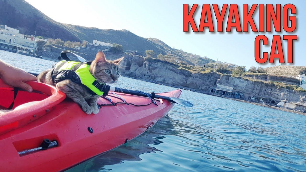Kayaking cat 😻