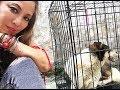 Yulin Dog Meat Festival 619 rescue