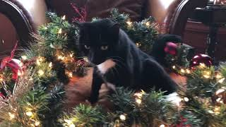 Funny Cat Inspects Christmas Decorations
