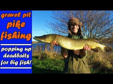 PIKE FISHING popping Up Deadbaits For BIG Gravel Pit PIKE!