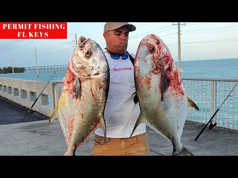 FISHING FOR MONSTER PERMITS, FLORIDA KEYS PERMIT FISHING, BRIDGE FISHING FL KEYS .