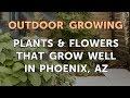 Plants & Flowers That Grow Well in Phoenix, AZ