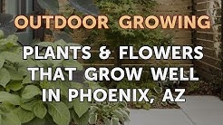Plants & Flowers That Grow Well in Phoenix, AZ